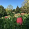 Fleurs-tulipesavril20